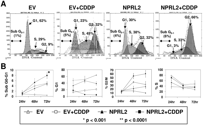Combination treatment of NPRL2 and cisplatin induces strong cell arrest in G2/M phase. The cell cycle in tumor cells treated with NPRL2 and IC 20 value of cisplatin was analyzed by flow cytometry with use of the APO-BRDU KIT. ( A ) The shift in cell cycle parameters of cells treated with NPRL2 is manifested as clear G1 and G2 peaks 72 h after treatment. In contrast, the cell cycle distribution showed an increase in the G2/M population after treatment with empty vector and cisplatin compared with cells treated with NPRL2 alone. The shift in cell cycle distribution was seen in cells treated with NPRL2+ cisplatin: the G2/M phase population strongly increased, whereas the G1 phase population decreased. ( B ) The cell cycle shift was analyzed at 24, 48, and 72 h after treatment. The combination of NPRL2 and cisplatin significantly increased the G2/M population in a time-dependent manner ( P