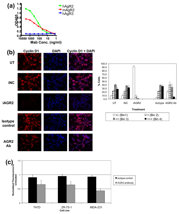 Impact of rat anti-AGR2 Ab on cell growth and cyclin D1 in T47 D cells . (a) Rat anti-AGR2 Abs were tested for AGR2 specificity by using an ELISA directed against human AGR2 and human AGR3. Species crossreactivity also was assessed by using an ELISA directed against mouse AGR2. (b) After confirming Ab specificity, T47 D cells were treated with an anti-AGR2 Ab (10 μg/mL) for 48 hours or AGR2 siRNA for 72 hours, and cyclin D1 modulation was examined with immunofluorescence. Cells were stained with cyclin D1, and mounting media containing DAPI were used. Images were taken by using a fluorescence microscope and pseudo-colored in Adobe Photoshop. The isotype control Ab used for cyclin D1 staining was an anti-AGR2 Ab of the same isotype but was not shown to modulate cyclin D1 or to have an impact on growth. Cyclin D1 intensity was quantitated by using ImagePro and binned based on intensity, and the percentage of cells in each bin based on cyclin D1 intensity is represented (Bin 1, weakest staining; Bin 4, brightest staining). (c) T47 D, ZR-75-1, and <t>MDA-MB-231</t> cells were treated for 5 days with 20 μg/mL anti-AGR2 Ab. The relative number of cells was quantitated by using the MTT assay. Results are expressed relative to untreated sample for each cell line.
