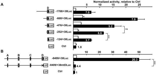Region D is necessary for expression of the gene in endothelial cells. A . Right: H5V endothelial cells (black bars) and L929 fibroblasts (white bars) were transfected with the pGL3basic vector (Ctrl) or successive 5′-deletion mutants of the −1768/+38Luc vector cloned into pGL3basic (80 fmoles) and with 54 fmoles of pCH110 normalization vector. After 48h of culture, cells were lyzed and the luciferase value of each sample was measured and normalized with its β-galactosidase value. Bars represent normalized activity as fold over Ctrl mean value set to 1. Results are presented as in Figure 3A . The experiment is representative of a set of three performed in similar conditions. *** p