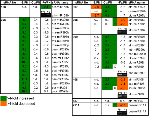 List of nutrient-responsive sRNAs . List of sRNAs that showed a strong positive reaction to S, Cu or Fe deprivation, respectively, shown as log2 values of stressed vs. FN samples. Only sRNAs that fulfilled the criteria described in the Methods section (positive response, log2 > 2 in one of the stress treatments, signal value > 100 in FN or deprived sample) in at least one of the comparisons are listed. The insets show results obtained by miRNA sqRT-PCR (after 25 cycles) from an independent experiment. To allow a better overview, values for known nutrient starvation-responsive miRNAs (398 and 857 for -Cu and 2111 for -P) were included, although they only showed a negative response or were not detectable. Arrows indicate directions of changes obtained in a second, independent -Cu experiment. n.d.: not detectable (both, FN and stress, signal values