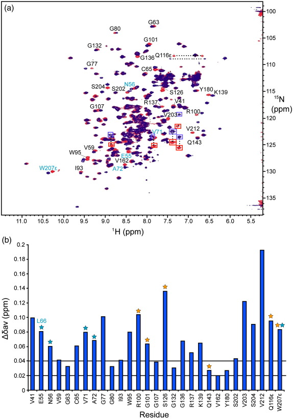 Identification of key interacting residues of mSPSB2. (a) Comparison of HSQC spectra of 0.1 mM uniformly N-labeled mSPSB2 (12–224) , free (red) and in a 1:1 complex with hPar-4 (59–77) (blue). Spectra were recorded in 95% H 2 O/5% 2 H 2 O, pH 6.7, 295 K, at 500 MHz. The red peaks are labeled with sequence-specific assignments for free mSPSB2 (12–224) using the one-letter code and sequence positions (black). Conserved residues of GUSTAVUS and three SPSB proteins that are important for GUSTAVUS/VASA 10 and mSPSB2/hPar-4 5 interactions are represented in cyan. Aliased resonances arising from Arg side chains of mSPSB2 are shown in red (free) and blue (complex) square boxes as these were due to different spectra widths used in the 15 N dimension. (b) Weighted average chemical shift variations of 15 N and 1 H between free and bound forms of 15 N-labeled mSPSB2 (12–224) . Cyan asterisks represent those residues that are conserved in GUSTAVUS, mSPSB1, mSPSB2, and mSPSB4 and have been shown to be involved in GUSTAVUS binding to VASA, 10 except for mSPSB2 E55, where L66 is found in GUSTAVUS, mSPSB1, and mSPSB4. Orange asterisks indicate those residues that are known to be involved in mSPSB2/hPar-4 interaction according to a previous study. 5 Horizontal lines show cutoffs for weighted average chemical shift differences of 0.02 and 0.04 ppm. The Trp207 peak is from the indole NH; the backbone amide resonance for this residue is close to the water resonance 5,21 and difficult to follow.