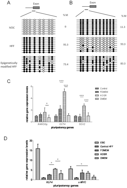 Effects of epigenetic modifications on HFFs. (A) Bisulfite sequencing of NANOG and (B) OCT4 promoter region. Black circles represent methylated sites, white circles represent unmethylated sites. Global methylated cytosines are shown as %M. (C) qPCR analysis of NANOG , OCT4 and SOX2 and (D) KLF4 and c-MYC expression in controls and HFFs with chemical treatment in different culture medium. The gene expression levels were normalized to the GAPDH and compared relative to gene expression in control HFFs. Error bar, S.D., * P
