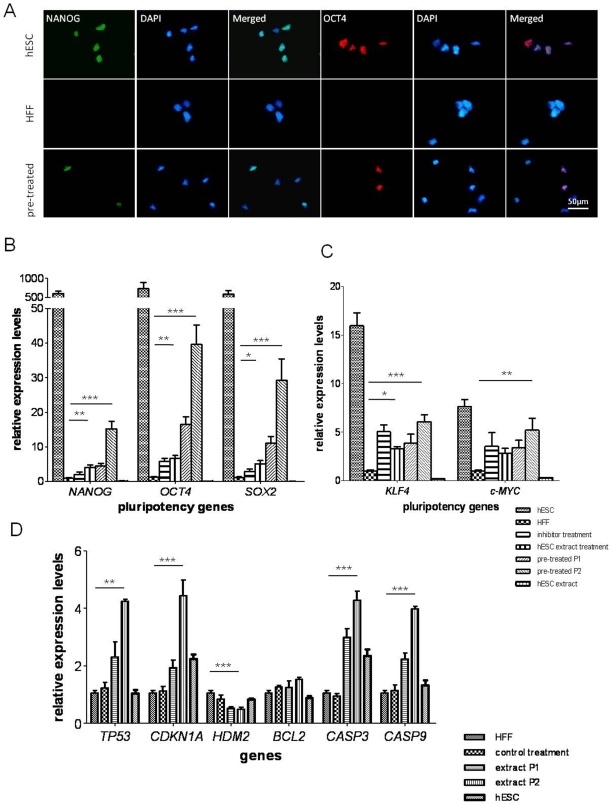 Protein and gene expression changes of HFFs after reprogramming treatment. (A) Pluripotency marker NANOG and OCT4 were induced in HFFs after reprogramming. (B), (C) and (D) qPCR analysis of pluripotency-related gene and apoptotic gene expression in controls and reprogrammed HFFs. The gene expression levels were normalized to the GAPDH and compared relative to gene expression in control HFFs. Error bar, S.D., * P