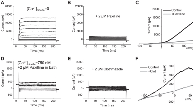Functional expression of BK and IK1 channels in primary cells derived from glioblastoma multiforme (GBM). ( A ) Representative recordings of macroscopic BK currents in primary cells cultured from surgical sample of glioblastoma multiforme. Currents were elicited by step pulses from −80 mV to +140 mV. ( B ) In the same cell shown in ( A ), the BK blocker paxilline (2 µM) potently inhibited macroscopic K + currents. ( C ) Representative traces of K + currents elicited in response to depolarization ramps from −80 mV to +140 mV in the absence and presence of paxilline. ( D ) Representative recordings of the whole-cell IK1 currents activated by step pulses from −120 to +60 mV. To isolate IK1 currents, [Ca 2+ ] pipette was clamped at 750 nM and 2 µM paxilline was added into bath solution. ( E ) The specific IK1 inhibitor clotrimazole (2 µM) potently suppressed macroscopic K + currents. ( F ) Representative traces of K + currents elicited in response to depolarization ramps −120 mV to +60 mV in the absence and presence of clotrimazole. For additional experimental details, see legend to Fig. 2 and Results section.