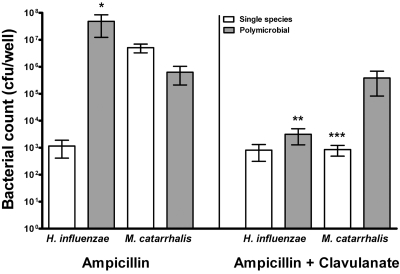 Beta-lactam protection in a polymicrobial biofilm. Stationary biofilms of H. influenzae Rd and/or M. catarrhalis were established on chamber slides for 24 h and treated with 100 µg/ml ampicillin or ampicillin with 25 µg/ml clavulanate for an additional 24 h. Biofilms were resuspended in sterile PBS, serially diluted, and plated on sBHI medium plus clarithromycin and BHI medium plates for enumeration of viable H. influenzae Rd and M. catarrhalis bacteria, respectively. Data are represented as means ± SEM. *, P