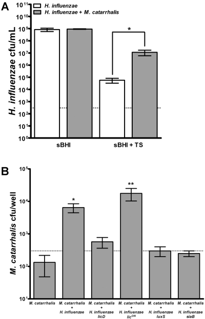 Polymicrobial biofilm formation protects H. influenzae and M. catarrhalis from antibiotic treatment. Single-species or polymicrobial stationary biofilms were established for 4 h and treated with 60 µg/ml trimethoprim-sulfamethoxazole (TS) (A) or 6 µg/ml clarithromycin (B) for 24 h. Biofilms were resuspended in sterile PBS, serially diluted, and plated on sBHI medium plus clarithromycin or BHI medium for enumeration of viable H. influenzae and M. catarrhalis bacteria, respectively. Data are represented as the mean results from three combined experiments, with two replicates per experiment. Error bars represent SEM. *, P