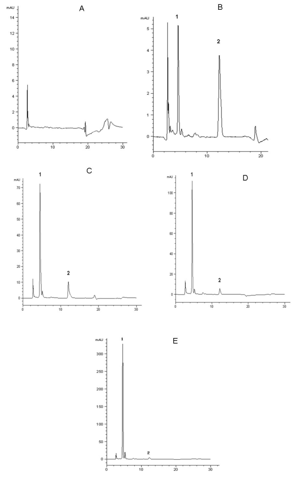 HPLC chromatograms of plasma mangiferin. HPLC separation was performed on plasma samples using the Agilent 1200 Series Rapid Resolution system. A COSMOSIL 5C 18 —MS—IIanalytical column (4.6 mm×250 mm,5 μm) was used and operated at 25 °C. The mobile phase consisted of methanol −2% glacial acetic acid (40:60 v:v). Typical chromatograms of blank plasma, blank plasma spiked with mangiferin and I.S., and rat plasma sample after injection of mangiferin are presented. Mangiferin and the I.S. were eluted at 5.6 and 12.16 min, respectively. The total run time was less than 30 min. A good separation of the I.S. and mangiferin was obtained under the specified chromatographic conditions. There is no disturbance from the background signals in the plasma after the protein precipitation step. A : Typical chromatogram of blank plasma. B . Typical chromatogram of blank plasma spiked with standard mangiferin (5 μg/ml) and I.S. panel. C . Typical chromatogram of blood sample containing mangiferin (24.14 µg/ml) collected at 0.5 h after mangiferin administration (10 mg/kg, i.v.). D : Typical chromatogram of blood sample containing mangiferin (73.88 µg/ml) collected at 0.5 h after mangiferin administration (25 mg/kg, i.v.). E : Typical chromatogram of blood sample containing mangiferin (221.54 µg/ml) collected at 0.5 h after mangiferin administration (50 mg/kg, i.v.).