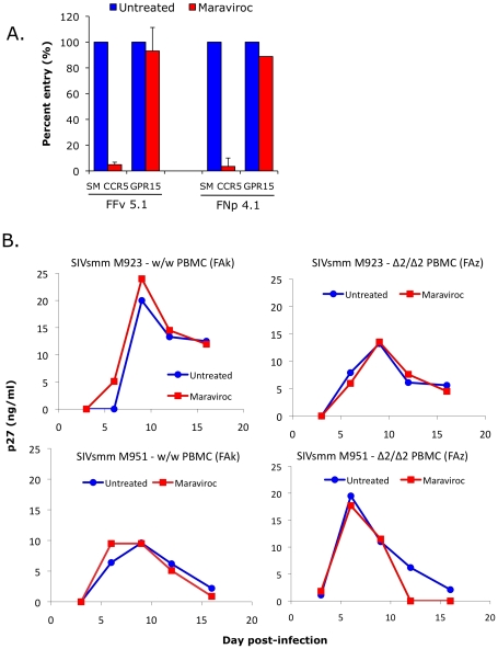Effect of CCR5 blocking on SIVsmm use of CCR5 and entry into primary SM <t>PBMC.</t> (A) 293T cells were transfected with CD4 in combination with wild-type smCCR5 or GPR15. Two days post-transfection, target cells were pretreated for one hour with or without the CCR5 antagonist, maraviroc (15uM), and then infected with pseudotype virions carrying SIVsmm Envs from a CCR5 wild-type animal (FFv) and a CCR5-null animal (FNp). Three days later, infection was measured based on RLU (mean ± SD) in cell lysates. (B) Growth curves from infection of primary SM PBMC (FAk: W/W SM; FAz: Δ2/Δ2 SM). Cells were stimulated for 3 days with <t>PHA,</t> then pretreated for one hour with or without maraviroc (15 uM), followed by infection with two different SIVsmm primary isolates (M923 and M951) in the continued presence or absence of maraviroc. SIV Gag p27 antigen levels in viral supernatants were measured by ELISA.