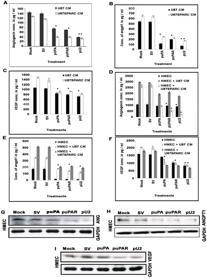 shRNA against uPA and uPAR inhibits secreted levels of ANG, Ang-1 and VEGF in cancer cells, endothelial cells and co-cultures. (A–C) 1.5×10 5 U87 and U87 SPARC cells were transfected as described earlier. Conditioned medium was collected after 72 hrs and assayed for (A) ANG, (B) Ang-1, and (C) VEGF levels by ELISA. Data represented are the average of three independent experiments. * p