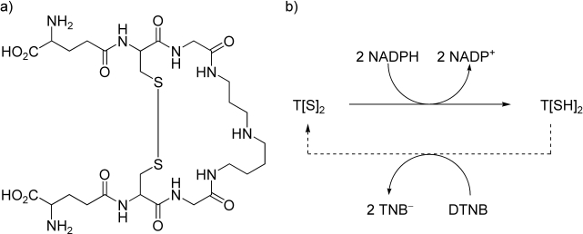 a) The structure of trypanothione (T[S] 2 ), the substrate of TryR. b) The principle of the DTNB-coupled assay for TryR.