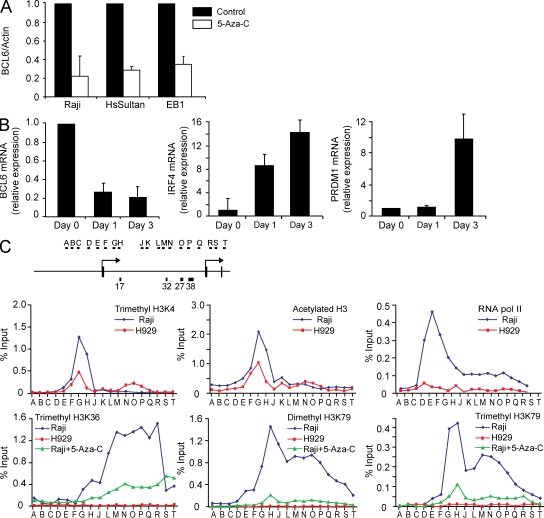 Positive regulation of BCL6 transcription by DNA methylation. (A) The Raji, HsSultan, and EB1 Burkitt lymphoma cell lines were treated with 5-Aza-C for 24 h, and BCL6 and actin mRNA abundance was determined by quantitative RT-PCR. The bar graph depicts the BCL6 to actin ratio from three independent replicates. Error bars indicate standard deviation. The value from untreated cells for each replicate was arbitrarily set to 1. (B) Raji cells were treated with 5-Aza-C for the indicated times. BCL6 , IRF4 , and PRDM1 mRNA abundance was determined by quantitative RT-PCR. The bar graphs depict the ratio of each transcript to GAPDH mRNA, with the value from untreated cells (day 0) arbitrarily set to 1. Data represent the mean of three independent replicates. Error bars indicate standard deviation. (C) The diagram depicts the basic features of the BCL6 locus 5′ end along with the approximate locations of primer sets used to analyze the chromatin immunoprecipitated with the indicated antibodies in each panel. Each ChIP primer was analyzed by quantitative PCR with the graph depicting the percentage of input chromatin recovered in the immunoprecipitation for each primer set. The data represent the mean of two independent biological replicates.