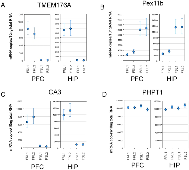 Examples of real-time PCR data. Group Least Squares Means were calculated in Array Studio and expressed as copy number/10ng of total RNA for FRL cohort 1 (FRL1), FRL cohort 2 (FRL2), FSL cohort 1 (FSL1) and FSL cohort 2 (FSL2) in P/FC and HIP. Data included for TMEM176A (A), Pex11b (B), CA3 (C) and invariant gene PHPT1 (D). Error bars represent 95% confidence intervals.
