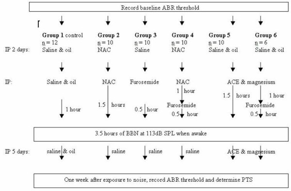 Flow diagram of the experiment . All of the animals received the same total number of injections, as drug injections necessary for the experiment were supplemented with control solution injections. For example, group #3 received a single injection of furosemide 0.5 hours before the exposure to 3.5 hours of noise, but in addition was injected with saline over the two preceding days and over the following five days in order to make up the number of injections. NAC - N-acetyl-l-cysteine; ACE - vitamins A, C and E; IP - intraperitoneal injection; PTS - permanent threshold shift; ABR - auditory nerve brainstem evoked response; BBN - broadband noise.