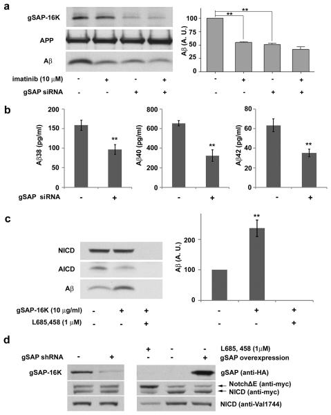 gSAP regulates Aβ production but does not influence Notch cleavage a: siRNA-mediated knockdown of gSAP in N2a cells overexpressing APP695 lowered Aβ production. The Aβ-lowering effects of imatinib and of siRNA were not additive (mean ±s.d.; ** p