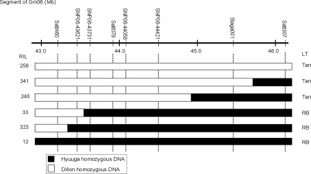 Graphical genotypes of representative RILs from Dillon × Hyuuga in the Rpp ?(Hyuuga) region on chromosome Gm06 . LT indicates the type of lesion, Tan is the susceptible reaction and RB is the resistant reaction