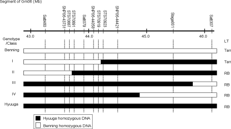 Graphical genotypes of representative RSLs from Benning × Hyuuga in the Rpp ?(Hyuuga) region on chromosome Gm06 . LT indicates the type of lesion, Tan is the susceptible reaction and RB is the resistant reaction. STS70887, STS70891, STS70919, and STS70923 previously identified by Hyten et al. ( 2009 ) were located at nucleotide 43746435, 43786392, 44086038, and 44118117 on Gm06 , respectively