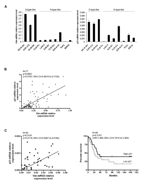 Vimentin-p21 mRNA correlation in NB cell lines and tumors - Association between p21 expression and clinical evolution . A. mRNA quantification of vimentin ( left panel ) and p21 ( right panel ) relative expression level after GAPDH normalization, in 10 high risk NB cell lines, using Sybr Green Q-PCR. The S- or N-subtype of the NB cell lines is indicated. This result was confirmed after EF1α normalization and by TaqMan Q-PCR quantification, using two different genes for normalization (18 S and TFRC) (data not shown). Bars and error bars represent the means and standard deviations, respectively. B. Representation of the p21 mRNA relative expression level according to that of vimentin, quantified by Sybr Green Q-PCR after 18 S normalization, in 77 NB tumor samples collected at the time of diagnosis (primary tumor biopsies or metastatic bone marrows, all containing more than 70% of tumor cells) (Clinical data are presented in Additional file 1 , Table S1). A cDNA sample from the SK-N-SH cell line was used as a reference to integrate all the data together in a unique analysis. The Spearman statistical test was performed with the Graph Pad Prism Software version 4.0. CI: Confidence Interval. C. Left panel: Representation of the p21 mRNA relative expression level according to that of vimentin, quantified by TaqMan Q-PCR after 18 S normalization, in the 40 high risk NB tumor samples of the cohort. The Spearman statistical test was performed as in 1B. This result was obtained using either Sybr-Green or TaqMan technology with two normalization genes, 18 S and GAPDH, or 18 S and TFRC, respectively (data not shown). Right panel: The survival analysis of patients older than one year of age with a stage 4 NB (N = 40) was performed using the Log-rank Kaplan-Meier estimation with the Graph Pad Prism Software version 4.0. The overall survival was defined as the time in months between diagnosis and death or last follow-up (excluding patients who died from toxicity). Patients were sep