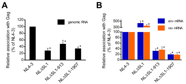 Characterization of the association between Gag and HIV-1 <t>RNA</t> . (A) Measurement of the association between Gag and HIV-1 genomic RNA. HIV-1 genomic RNA immunoprecipitated with the Gag was characterized by qPCR using a primer/probe set targeting the unspliced RNA transcript. (B) Measurement of the association between Gag and spliced HIV-1 mRNA. The same cDNA preparation described above was subjected to qPCR using a primer/probe set specific for env mRNA and rev mRNA sequences. The copy number in each sample was adjusted for input by the cell number and for transfection efficiency by GFP expression from a co-transfected reporter construct. The amount of NL4-3 RNA was set at 100%. Means and SD of <t>three</t> independent experiments are shown. *, indicates p