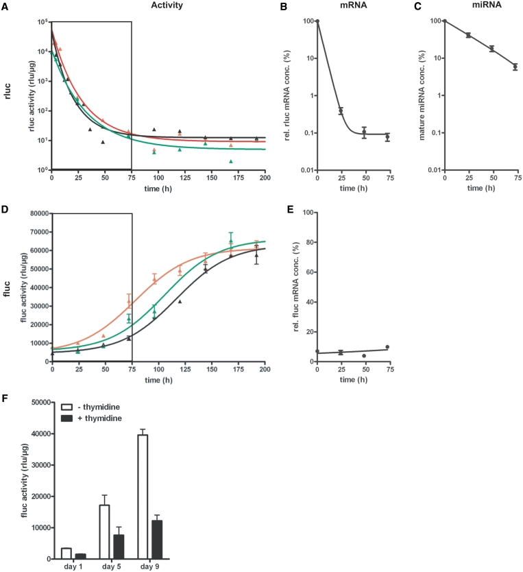 Recovery kinetics of target gene expression after the termination of the tet-regulated miRNA3-mediated gene knockdown in the Tet-Off cell line HtTA 16-1. (A+D) Tet-regulated co-expression of mi RNA3(FL-B) and rluc in the cell line HtTA16-1 (utilizing the Tet Off system) was kept activated for 1 week (red), 2 weeks (black) and 4 weeks (green). Then, tet-regulated gene expression was switched off, by addition of dox (500 ng/ml), and rluc ( A ) and fluc ( D ) activity measured at indicated time points over a period of 192 h. Both luciferase activities were normalized to total protein concentration. The boxed area marks the time period analysed in B, C and E. (B+C+E) Quantification of relative rluc ( B ) and fluc ( E ) mRNA concentrations and the concentration of mature miRNA ( C ) within a period of 72 h after tet-regulated gene expression, that has been activated for 2 weeks, was switched off. The mRNA and miRNA concentrations were normalized to the concentration of β-actin mRNA In (E), 100% represents the mRNA concentration in cells expressing no miRNA. Therefore, the rel. fluc mRNA concentration mirrors the knockdown efficiency at respective time points. Figures show means and SEM of multiple samples from two independent experiments. ( F ) Recovery of fluc activity after miRNA3(FL-B) knockdown in cell populations with different division rates. In cell line HtTA 16-1, miRNA expression was activated by growing the cells in the absence of dox for 10 days. After subsequent addition of dox to the tissue culture medium (500 ng/ml) to terminate tet-regulated miRNA3(FL-B) expression, cells were divided into two populations. In one population, the cell cycle was artificially elongated to 48 h by the use of S-phase blocker thymidine (+thymidine, black). In the other population (–thymidine, white), cell division rate was left unaltered at 24 h, serving as a control population. Figure shows fluc activities (rlu/µg total protein) at Days 1, 5 and 9 normalized to a control experi