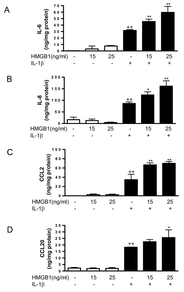 Effect of HMGB1 and IL-1β on the levels of cytokine and chemokine released into the medium by osteoarthritic synoviocytes . (a) IL-6, (b) IL-8, (c) CCL2 and (d) CCL20 protein levels. Cells were stimulated with IL-1b (10 ng/ml) for 24 hours in the presence or absence of high mobility group box 1 (HMGB1) at 15 and 25 ng/ml. Protein levels were determined in supernatants by ELISA. Data are expressed as mean ± standard error of the mean. Duplicate samples from six patients were used. ++ P