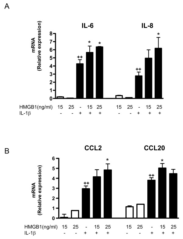 Effect of HMGB1 and IL-1β on cytokine and chemokine mRNA levels in OA synoviocytes . (a) IL-6, IL-8, and (b) CCL2 and CCL20 mRNA relative expression. Cells were stimulated with IL-1b (10 ng/ml) for 24 hours in the presence or absence of high mobility group box 1 (HMGB1) at 15 and 25 ng/ml. mRNA expression was determined by real-time PCR. Data are expressed as mean ± standard error of the mean. Duplicate samples from four patients were used. ++ P