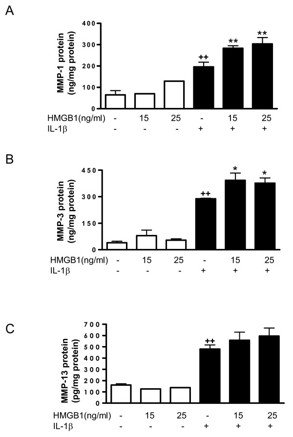 Effect of <t>HMGB1</t> and IL-1β on the levels of MMP released into the medium by osteoarthritic synoviocytes . (a) Matrix metalloproteinase (MMP)-1, (b) MMP-3 and (c) MMP-13 protein levels in the medium. Cells were stimulated with IL-1b (10 ng/ml) for 24 hours in the presence or absence of high mobility group box 1 (HMGB1) at 15 and 25 ng/ml. MMP protein was measured by ELISA in supernatants. Data are expressed as mean ± standard error of the mean. Duplicate samples from six to eight patients were used. ++ P