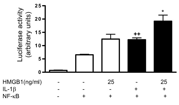 Effect of HMGB1 and IL-1β on NF-κB activation . Transient transfection was performed with the reporter construct nuclear factor (NF)-κB-luc and the internal control pRL-TK, as indicated in Materials and Methods. Cells were treated for 24 hours with high mobility group box 1 (HMGB1) at 25 ng/ml in the absence or presence of IL-1β (10 ng/ml). Firefly luciferase activity was normalized to Renilla luciferase activity. Data are expressed as mean ± standard error of the mean. Duplicate samples from six patients were used. ++ P