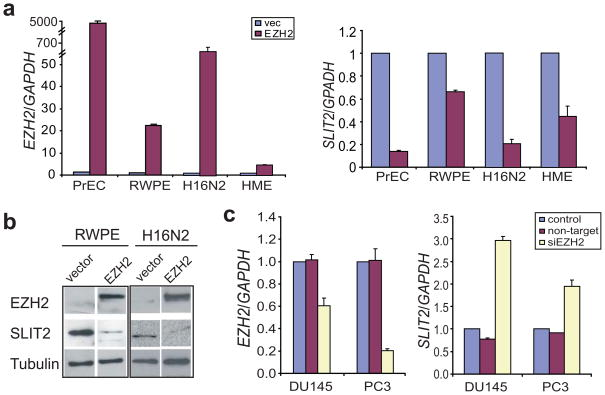 SLIT2 expression is negatively regulated by EZH2 ( a ) EZH2 overexpression represses the transcript level of SLIT2 . Benign immortalized prostate cell lines, PrEC and RWPE, and breast cell lines, H16N2 and HME, were infected with adenovirus overexpressing EZH2 or empty vector, and analyzed for EZH2 and SLIT2 mRNA levels by QRT-PCR. ( b ) Immunoblot analysis of EZH2 and SLIT2 in benign immortalized prostate cell line (RWPE) and breast cell line (H16N2) following infection with EZH2 adenovirus or vector control for 48 hrs. The β-tubulin protein was used as a loading control. ( c ) QRT-PCR analysis of EZH2 and SLIT2 transcripts in DU145 and PC3 prostate cancer cells following RNA interference of EZH2.