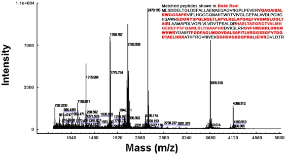MALDI-TOF peptide mass fingerprint (PMF) spectrometry of the Rv0045c protein. The PMF analysis was made from fragments of purified Rv0045c protein derived through trypsin digestion. The expected tryptic masses clearly matched, with 1 Da tolerance, the calculated values. The sequence coverage of these fragments was shown in bold red.