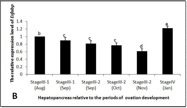 Hepatopancreatic Es-FABP expression was influenced by the period of reproductive activity, as determined by real-time <t>qRT-PCR</t> . Es-FABP expression, normalized to beta-actin, was quantified in mitten crab ovaries collected during the stages of rapid ovarian maturation: Stage III-1(Aug), Stage III-1(Sep), Stage III-2 (Sep), Stage III-2 (Oct), Stage III-2 (Nov), and Stage IV (Jan). Bars represent the triplicate mean ± S.E. from three individuals (n = 3). Bars with different letters differed significantly (P