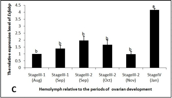 Hemocytes Es-FABP expression was influenced by the period of reproductive activity, as determined by real-time qRT-PCR . Es-FABP expression, normalized to beta-actin, was quantified in mitten crab ovaries collected during the stages of rapid ovarian maturation: Stage III-1(Aug), Stage III-1(Sep), Stage III-2 (Sep), Stage III-2 (Oct), Stage III-2 (Nov), and Stage IV (Jan). Bars represent the triplicate mean ± S.E. from three individuals (n = 3). Bars with different letters differed significantly (P