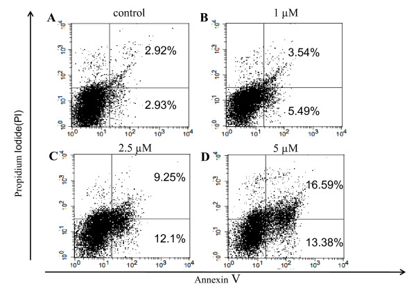 SAHA induces apoptosis in colon cancer cell lines . 320 HSR cells were stained with Annexin V (FITC) and propidium iodide (PI) after treatment with SAHA. Fluorescence-activated cell sorting analysis of 320 HSR cancer cell line at 48 h following treatment with 0, 1, 2.5, and 5 μM SAHA (A, B, C, D, respectively). Percentages represent Annexin V-positive/PI-negative (early apoptotic) and Annexin V-positive/PI-positive cells (apoptotic).