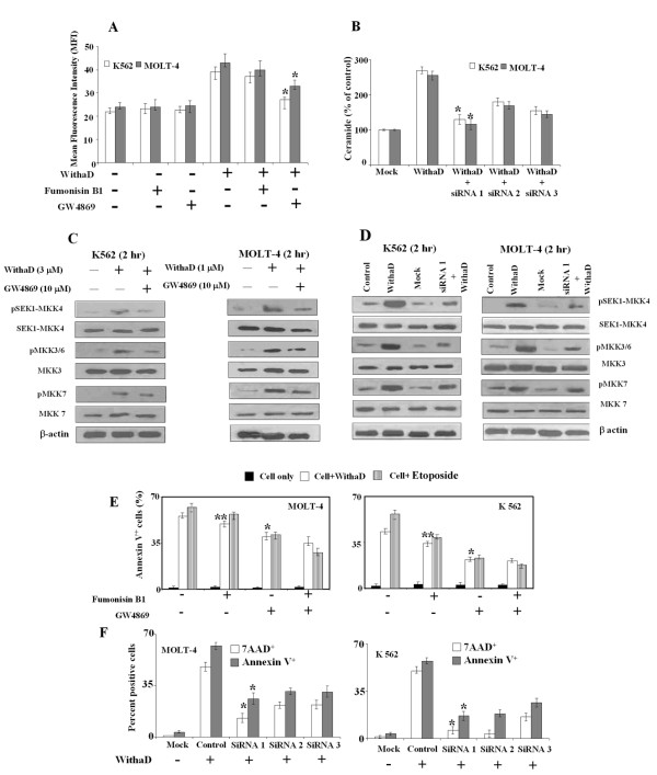 Effect of Fumonisin B1, (GW4869) and N-SMase silencing on ceramide production, activation of MKK group of kinases and regulation of WithaD-mediated apoptosis . (A) Effect of Fumonisin B1 (10 μM) and GW4869 (10 μM) on ceramide level induced by WithaD. Cells were pretreated with inhibitors for 1 hr; incubated further 1 hr with WithaD and ceramide levels were measured by FACS. Each column represented the mean ± S.D. in duplicate in three independent experiments. *indicates statistically significant difference ( P