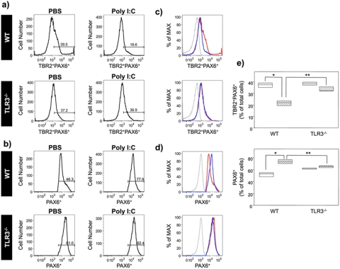 Treatment with poly(I ⋅ C) during gestation negatively regulates the transition of PAX6 + radial glia (RG) cells to <t>TBR2</t> + PAX6 + intermediate progenitor cells (IPC) in a TLR3-dependent manner. WT C57BL/6 or TLR3 −/− C57BL/6 pregnant mice were treated with either PBS or poly(I ⋅ C) for three consecutive days (GD15 to GD17) and injected with BrdU on GD16. Cerebral cortical cells were isolated from embryos on GD18. Total viable cells were analyzed for the expression of TBR2 and PAX6 by flow cytometry. (a) Representative histograms showing TBR2 + PAX6 + positive IPC in WT and TLR3 −/− cerebral cortical cells isolated from embryos ( n = 3) obtained from mice treated with PBS or poly(I ⋅ C). The numbers above the brackets indicate the percentages of TBR2 + PAX6 + IPC. (b) Representative histograms showing PAX6 + RG in WT and TLR3 −/− cerebral cortical cells isolated from embryos obtained from PBS- and poly(I ⋅ C)-treated mice. The numbers above the brackets indicate the percentages of PAX6 + RG cells. Gating for the PAX6- or TBR2-positive cells was based on the staining observed with the isotype control. (c) Representative histograms showing the mean fluorescence intensity of TBR2 and PAX6 expression. The mean fluorescence intensity (MFI) is shown as a percentage of the maximum expression. MFI values for the different groups are indicated as follows: PBS-treated group (red line), poly(I ⋅ C)-treated group (blue line), and isotype control group (gray line). The MFI for PBS-treated mice was 1,158.7 ± 57.4, and the MFI for poly(I ⋅ C)-treated mice was 809.3 ± 28.4. (d) Representative histograms showing the MFI of PAX6 expression. Experiments were performed with cerebral cortical cells isolated from embryos ( n = 3); data from one representative cortex are shown. MFI values for the different groups are indicated as follows: PBS-treated group (red line), poly(I ⋅ C)-treated group (blue line), and isotype control group (gray line). The MFI for PBS-treated mice was 13,78