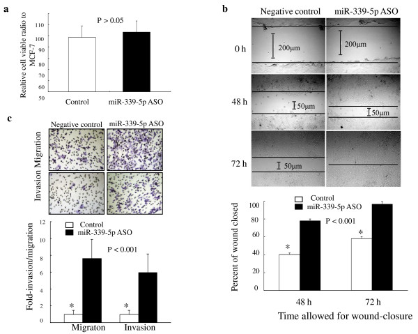 Effects of miR-339-5p on breast cancer cells . A . Regulation of breast cancer cell growth by miR-339-5p. MCF-7 cells were grown and transiently transfected with miR-339-5p antisense oligonucleotide or scrambled sequence oligonucleotide as negative control for 4 days, and cell viability was analyzed using a kit. The experiments were in triplicate and repeated twice. B . Wound-healing assay. MCF-7 cells were grown and transiently transfected with miR-339-5p antisense oligonucleotides or scrambled sequence oligonucleotide as negative control for 3 days and subjected to the wound-healing assay. Magnification: ×100. C . Transwell migration and Matrigel invasion assays. MCF-7 cells were grown and transiently transfected with miR-339-5p antisense oligonucleotides or scrambled sequence oligonucleotide as negative control for 2 days and subjected to migration and invasion assays. Representative photographs (upper) and quantification (lower) are shown. Magnification: ×200.