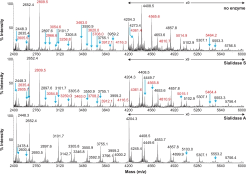 Partial MALDI-TOF MS profiles of the permethylated N -linked glycans derived from SRECs after digestion with sialidase S or sialidase A. Data were obtained from the 50% acetonitrile fraction and all molecular ions are present in sodiated form ([M + Na] + ). Sialylated species are annotated in red (see supplemental Table S1 ).
