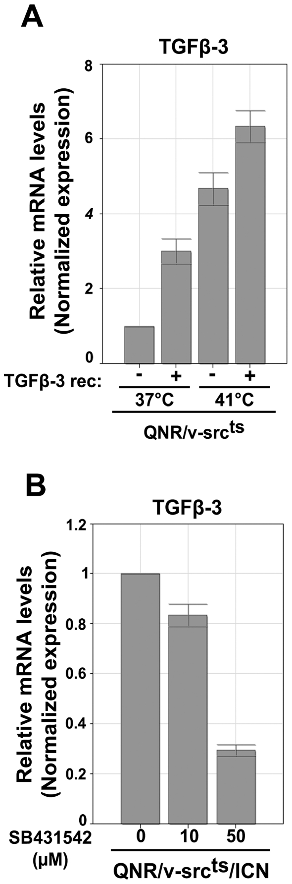 TGF-β3 expression is controlled by a positive feed-back loop. QPCR analysis of TGF-β-3 mRNA levels in (A) QNR/v-src ts treated with 2 µg/ml of recombinant TGF-β3 or (B) QNR/v-Src ts /ICN cells at 37°C incubated with increasing doses of SB431542 during 24 hrs. After reverse transcription of 1 µg of RNA, TGF-β3 cDNA were amplified by QPCR. Results were normalized based on HPRT and TBP transcript levels and presented in relative arbitrary units using values obtained for untreated cells as reference equal to 1. Each bar represents the mean −/+ S.E. of three experiments.