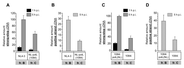 The presence of RT polymerase domain from HIV-1 subtype C leads to decreased cDNA accumulation in reverse transcription complexes . Accumulation of strong-stop (A and C) and positive-strand (B and D) viral DNA in RTCs isolated at 1 and 5 h p.i. Sup-T1 cells were synchronously infected with MLV Env-pseudotyped backbone NL4-3 or chimeric NLpolL(1084) (A and B), and backbone HIV1084i or chimeric 1084polL(NL) viruses (C and D). RTCs were purified from cell lysates. DNA was isolated from RTCs and subjected to quantitative real-time PCR. Levels of cDNA are shown as percentages of the maximal accumulation detected for strong-stop cDNA in RTCs. Error bars show the standard deviation from three independent viral preparations.
