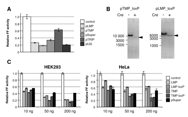 Functional characterization of shRNA-expressing plasmids . (A) HeLa cells were co-transfected with 50 ng of plasmids expressing shRNA targeting firefly luciferase, 200 ng of target pGL2 plasmid and 1 ng of phRL-SV40. Firefly luciferase (FF) activity normalized according to non-targeted Renilla luciferase activity is shown. Firefly luciferase activity in control sample (without a shRNA-expressing plasmid) was set to 1. Values are expressed as mean +/- SEM from samples transfected at least in triplicates. (B) pTMP and pLMP plasmids carrying loxP sites were transformed either to regular or Cre recombinase-expressing E. coli strains. Electrophoresis of isolated plasmid DNA is shown. The recombined plasmid after Cre-mediated recombination is marked by an arrow. (C) HeLa and HEK293 cells were co-transfected with 10-200 ng of plasmids expressing shRNA targeting firefly luciferase, 200 ng of target pGL2 plasmid, and 1 ng of phRL-SV40. Relative firefly luciferase activity compared to control cells is shown. Firefly luciferase activity in the control sample (omitting shRNA-expressing plasmid) was set to 1. Values are expressed as mean +/- SEM from samples transfected at least in triplicates.