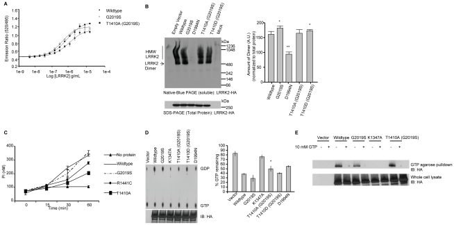 Functional characterization of modulation of LRRK2 at T1410. (A) A LanthaScreen assay was used to assess LRRK2 T1410A kinase activity. Titration of wildtype, G2019S, and T1410A (G2019S) LRRK2 proteins demonstrate that mutation T1410A does not affect phosphorylation of LRRKtide. (B) To investigate dimer formation HEK-293T cells were transfected with the indicated LRRK2 constructs. Cell pellets were split equally for lysis by freeze/thaw cycles directly in PBS or lysis with 1% <t>SDS</t> and PBS with sonication, and 10 ug of protein lysate was loaded onto a native gel (3–12% <t>Bis-Tris)</t> or an SDS gel (7% Tris acetate-SDS), respectively. LRRK2 complexes were visualized with the anti-HA antibody by Western blot with standard ECL. Dimer-sized structures are evident (signal from 480 to 550 kDa), monomeric LRRK2 (278 kDa) is only visible by overexposure (Supplemental Figure S1 , [25] ).Western blots representative of five independent experiments are shown. Normalization of the LRRK2 dimer to total LRRK2 protein (SDS-solubilized) was done using densitometry analysis. ** p