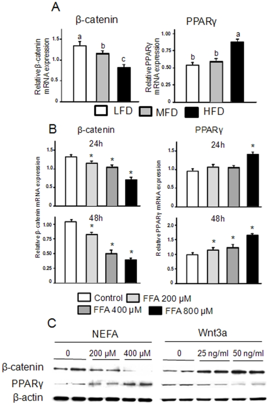 Serum from HFD fed rats and an artificial FA mixture down-regulate β-catenin but up-regulate PPARγ in ST2 cells, Wnt3a does the opposite. (A), ST2 cells were treated with 2% serum from LFD, MFD or HFD rats for 3 days. Cell RNAs were isolated and real-time PCR was performed for β-catenin and PPARγ. (B), ST2 cells were treated with three different concentrations of FAs (200, 400 or 800 µM) for 24 h and 48 h. Cell RNAs were isolated and real-time PCR was performed for β-batenin and PPARγ. (C), ST2 cells were treated with a FA mixture and Wnt3a respectively for 24 h. Cell protein lysates were collected, and western blots were performed for β-catenin, PPARγ and β-actin in duplicates. Data bars are expressed as mean ± SEM (n = 3/treatment). Means with different letters differ significantly from each other at P