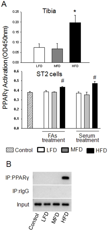 Activation of PPARγ and regulation of its target gene. (A), nuclear proteins were extracted from rat tibia and from ST2 cells treated with rat serum and FAs mixture using 10 cm dish. TransAM was performed for activity of PPARγ. (B) ST2 cells were treated for 24 h with FAs mixture according to the concentrations that appeared in animal circulation. ChIP of mouse aP2 enhancer elements by specific anti PPARγ antibody. Control, normal cell culture medium; LFD, low fat diet (control pelleted AIN-93G 14% fat diet); MFD, medium fat TEN diet (25% fat diet); HFD, high fat TEN diet (45% fat diet). Bars are expressed as mean ± SEM in triplicates. *, P