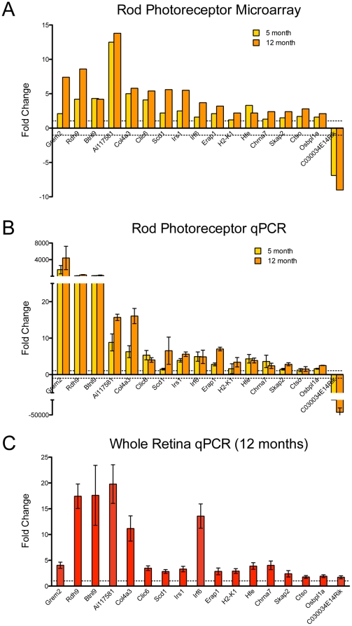 qRT-PCR validation of selected genes using independent biological samples. Predicted fold changes from microarray analysis and relative gene expression fold change from qRT-PCR (y-axis, expression normalized relative to 1.5 month old group, represented by dotted lines at y = 1, −1) for independent biological replicates of rod photoreceptors (n = 4 for each experiment) is shown in (A) and (B), respectively. The same genes were tested on whole retina samples from Nrlp-eGFP mice aged 1.5 and 12 months, n = 4 biological replicates for each time point (C). Error bars indicate ±SEM. Grem2 expression was detected only beginning at 5 months in photoreceptors.