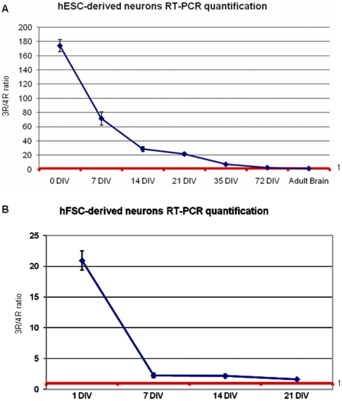 RT-PCR quantification of tau isoform expression. (A) hESC-derived neurons: quantification (Image J software) of 3R and 4R tau RT-PCR bands shows that the ratio between 3R and 4R tau isoforms becomes similar to that in adult human brain [1] during neuronal differentiation. (B) hFSC-derived neurons: quantification (Image J software) of 3R and 4R tau RT-PCR bands shows that the time for differentiation of neurons derived from hFSCs is shorter than that for hESCs, at 21 DIV the ratio between 3R and 4R tau isoforms is already similar to that in adult human brain [1] .