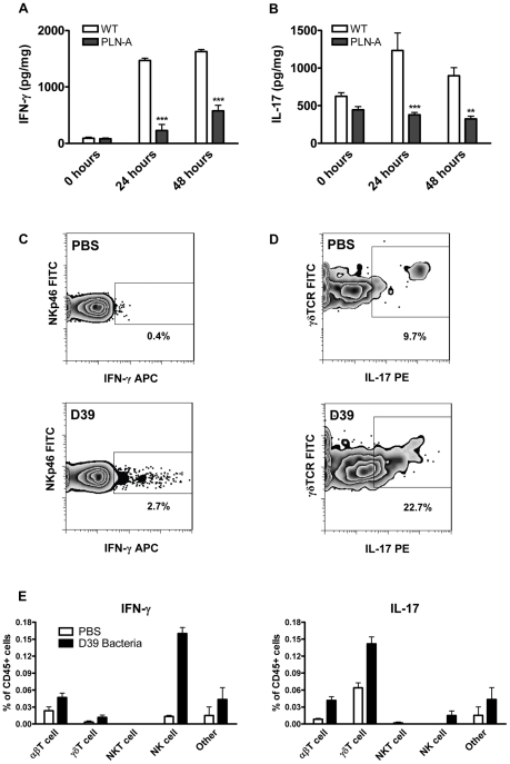 PLY is required for IFN-γ and IL-17A induction following infection with S. pneumoniae . (A) IFN-γ concentrations in lungs of infected mice in a model of acute pneumonia. MF1 mice were infected intranasally with wild-type (WT) or PLY-deficient (PLN-A) pneumococci. IFN-γ concentrations were determined in lung homogenates at 0 hours, 24 hours or 48 hours after infection. Results are mean cytokine concentration (+ SEM) for 5 mice per group. *** P