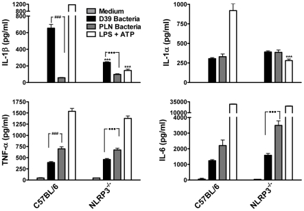 Live S. pneumoniae promotes IL-1β secretion by DC in a NLRP3-dependent manner and this requires PLY. DC (6.25×10 5 /ml) from C57BL/6 or NLRP3 −/− mice were incubated for 24 hours with medium alone, with wild-type S. pneumoniae (D39; 10 bacteria:1DC) or with PLY-deficient bacteria (PLN; 10 bacteria:1 DC). As a positive control for IL-1β secretion and NLRP3 inflammasome activation, DC were primed with LPS (100 ng/ml) for 23 hours prior to one hour stimulation with ATP (2.7 mg/ml). Following incubation, supernatants were removed and assayed for IL-1β, IL-1α, TNF-α and IL-6. Results are mean cytokine concentrations (+ SEM) for triplicate samples. *** P
