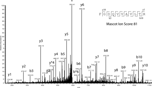 MS/MS profile of ion m / z 601.41. A tandem mass spectrum of a prevalent ion on a particular time point in the LC gradient and ionized on the <t>LTQ-Orbitrap</t> is shown. The peptide fragments randomly on each amide bond, resulting in carboxyl-terminal y ions or amino-terminal b ions. After the fragment masses were submitted to Mascot, the peptide was identified as FGDQVVAVLTR ( inset with detected y and b ions represented) from protein Rv3220c, a probable two-component sensor kinase. * Asterisk represent the parent ion.