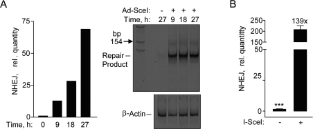 Repair by NHEJ monitored by genomic DNA qPCR. ( A ) Time course exhibiting an increase in SYBR green fluorescence after amplification by qPCR in hESCs (left panel). Polyacrylamide gel showing the NHEJ repair product at ~125 base pair fragment at the indicated times (right panel). ( B ) Relative NHEJ levels after infection with Ad-SceI adenovirus with 30 MOI at 24 h. Fold (x) and statistical significance indicates changes in the relative repair levels when compared to the Ad-SceI infected sample. The difference in increases in the relative quantity of NHEJ at 27 h in ( A ) compared to 24 h in ( B ) is mostly due to a difference in the values obtained from the samples without I-SceI between the two data sets.