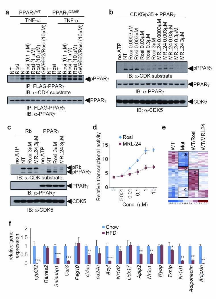 Anti-diabetic PPARγ ligands block CDK5-mediated phosphorylation of PPARγ a , TNF-α-induced phosphorylation of PPARγ in 3T3-L1 adipocytes expressing either WT or Q286P mutant of PPARγ treated with rosiglitazone and/or GW9662. b and c , In vitro CDK5 assay with either rosiglitazone or MRL24. d , Transcriptional activity of a PPAR-derived reporter gene in response to rosiglitazone or MRL24 (n=3). e , Microarray analysis of differentiated PPARγ-null fibroblasts expressing WT (NT, rosiglitazone or MRL24 treated) or S273A mutant PPARγ. f , mRNA expression of genes regulated by the phosphorylation of PPARγ in epididymal fat tissue of mice on either chow or HFD for 13 weeks (n=5). Error bars are s.e.m.; * p
