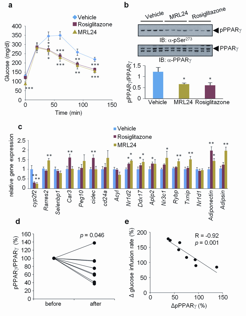 Correlation between the inhibition of phosphorylation and improvement of insulin sensitivity by anti-diabetic PPARγ ligands a , Glucose-tolerance tests in 16-week HFD mice treated with vehicle, rosiglitazone or MRL24 (n=10). b , phosphorylation of PPARγ in WAT. c , The expression of gene sets regulated by PPARγ phosphorylation in WAT (Error bars are s.e.m.; * p
